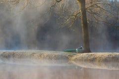 Canoës attendant par l'arbre photo libre de droits