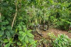 Canoës en bois abandonnés dans le fleuve Amazone image libre de droits