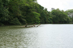 Cano Negro 06. A photo of Cano Negro river, near the border with Nicaragua, Costa Rica Royalty Free Stock Image