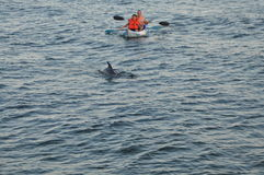 Canoa con los delfínes Fotos de archivo