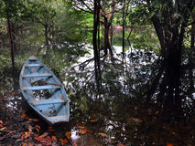Canoa de Amazon Imagem de Stock