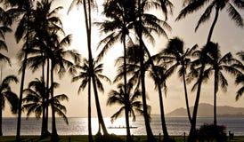 Canoa de guiga que rema na frente das palmeiras Foto de Stock