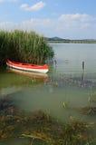 Canoa en el arundineo Foto de archivo