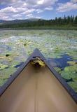 Canoa en el lago con Lily Pads floreciente Imagen de archivo libre de regalías