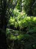 Canoa na vegetação imagem de stock