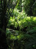 Canoa nella vegetazione Immagine Stock