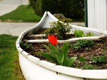 Canoa reciclada, blanca reutilizada como jardín de flor Foto de archivo libre de regalías