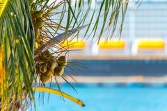 Canoas de salvação de um navio de cruzeiros e de cocos em uma palmeira em Cozumel México Foto de Stock Royalty Free