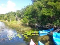 Canoas en la reserva del mono de Punta Laguna foto de archivo