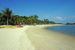 Canoas y palmeras en la playa soleada Imagenes de archivo