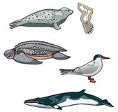 Vector Sea creatures-7 royalty free illustration