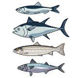 Vector illustrations of Sea Fish-9 vector illustration