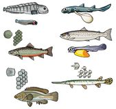 Vector Sea creatures-2 royalty free illustration
