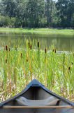 Canoe  cattails. Canoe going through cattails in a lake Royalty Free Stock Images