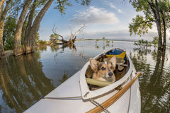 Canoe dog Royalty Free Stock Image