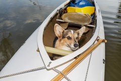 Canoe dog Royalty Free Stock Photo