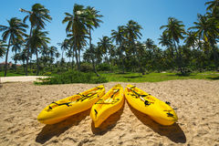 Canoe Kayak boats on sunny tropical beach with palm trees Royalty Free Stock Photography
