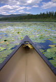 Canoe on Lake with Blooming Lily Pads Royalty Free Stock Image