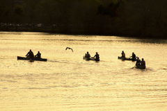 Canoe paddlers and seagull on the Charles River, Waltham, MA. Royalty Free Stock Photos