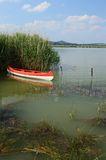 Canoe in the reedy. White red canoe int the reedy Stock Photo