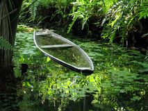 Canoe in the vegetation. Canoe in river inside of the forest - Amazonia - Brazil Royalty Free Stock Photo