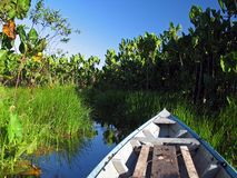 Canoe in the vegetation Royalty Free Stock Image