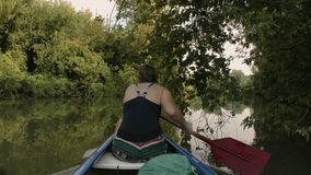 Canoeing on a lake. Canoeing in beautiful natural environment, passing under branches stock footage