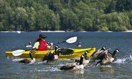 Canoeing mit Gänsen Lizenzfreie Stockbilder