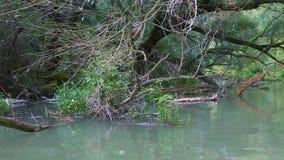 Canoeing su un fiume stock footage
