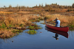 Canoeist Photographing an Alligator. Self Portrait of Canoeist Photographing an American Alligator in the Okefenokee Swamp using a remote-triggered camera on Stock Image