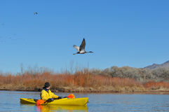 Canoeist on scenic lake. With Sandhill Crane bird flying above Royalty Free Stock Images