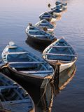 Canoes. In the river moored in line Royalty Free Stock Photos