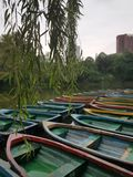 Canoes in Chengdu`s Peoples Park stock images