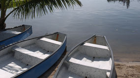 Canoes Florida Stock Image