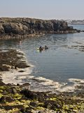 Canoes paddling on sea Stock Images
