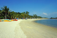 Canoes and palm trees on sunny beach Stock Images