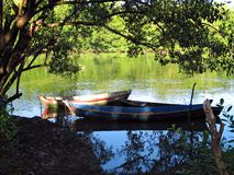 Canoes in the trees. Amazonia - Brazil royalty free stock photo