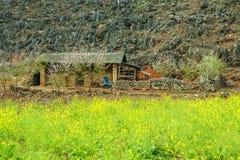 Canola śródpolny pobliski dom mniejszości etniczne Fotografia Royalty Free