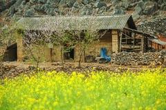 Canola śródpolny pobliski dom mniejszości etniczne Zdjęcie Royalty Free