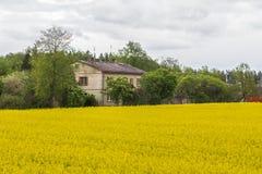 Canola, τομέας συναπόσπορων με το σπίτι Στοκ Φωτογραφία
