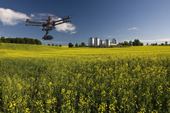 Canola aerial patrol Stock Photography