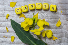 Canola concept on gray wood Stock Photography