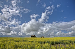 Canola Crop Canada Royalty Free Stock Photo