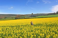 Canola Crop Magic. Smilling Man looks up at Hat tossed in the air in Happiness on a Beautiful Spring day. Taken on wide Angle Lens in Northumberland, England royalty free stock photos