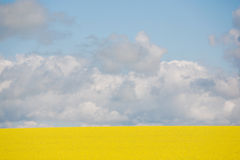 Canola Crop in paddock Royalty Free Stock Images