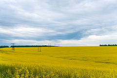 A Canola crop, in Spring flower Royalty Free Stock Photography