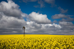 Canola Crops Australia Stock Photo