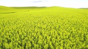 Canola crops in yellow fields split by water drainage region