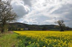Canola de la primavera Fotografía de archivo