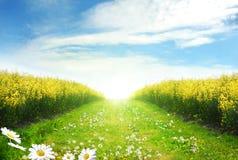 Canola e o sol atrás Foto de Stock Royalty Free